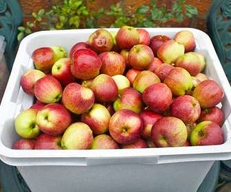 Game for your kids to eat well and have fun at the same time looking for their photo in one of these apples.