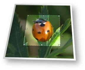 Online picture cropper tool for photos and images.
