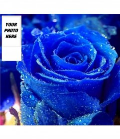 Customize your twitter profile with this fund for blue rose twitter and your own