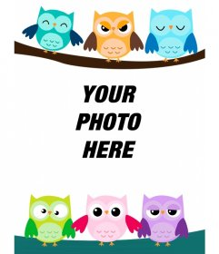 Photo frame of six owls