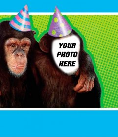 Photomontage with a monkey dressed with party hat