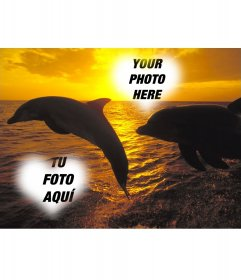 Collage for two photos heart-shaped and dolphins jumping