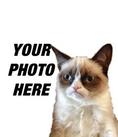 Photomontage with Grumpry cat, meme that has become famous all over the Internet