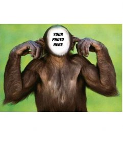 Photomontage of monkey custom, very funny! put a face to this chimpanzee covers his ears. What you can send as a joke.