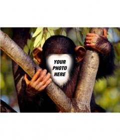 Photomontage fun to put a face to a monkey in a tree