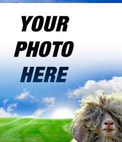 Photomontage with a sheep and a green meadow background