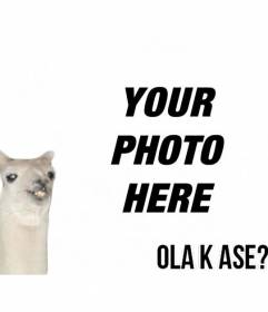 """Create a photomontage easy with flame meme """"Ola k ase?"""" and add text for free online"""