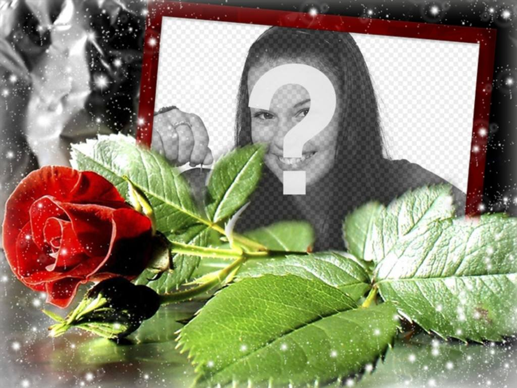 Postcard for love with a rose in which you can put your photo