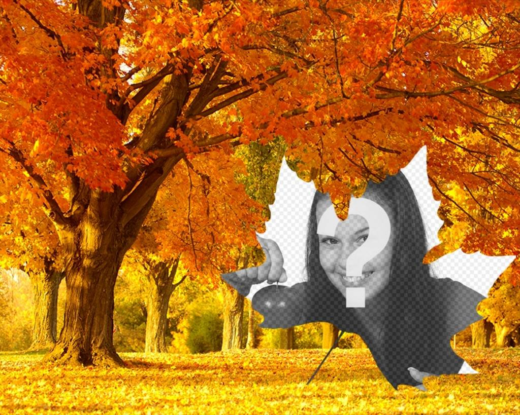 Photo collage of autumn with a background of trees and a leaf shaped frame