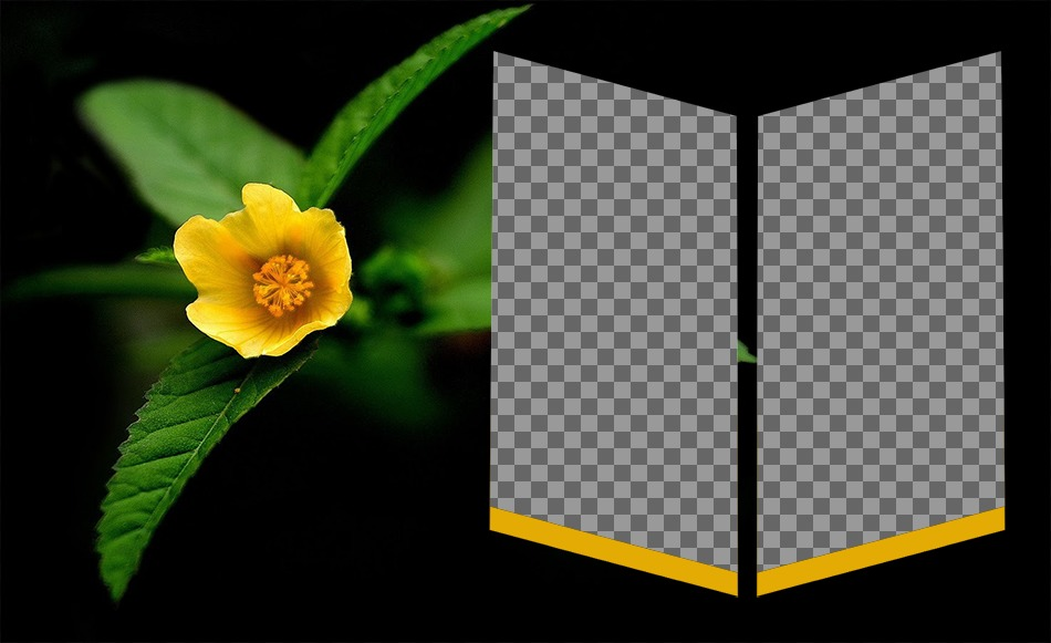 Frame next to a yellow flower for two photos as an insignia