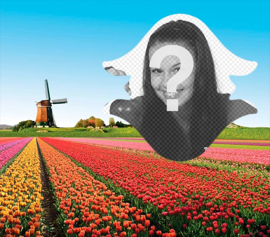 Postcard of Holland with tulips