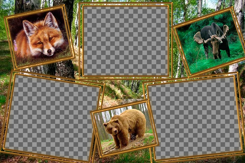 Collage of animals to edit with three photos of yourself