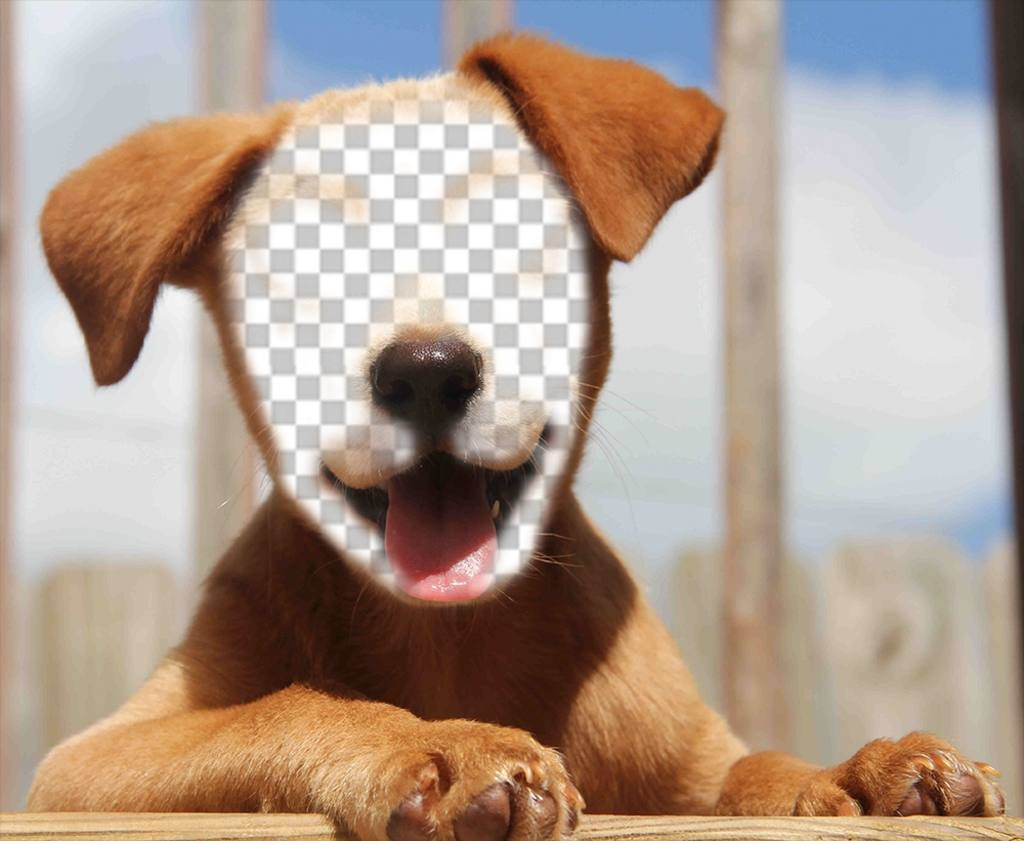 Add your face to the face of a beautiful dog with this effect