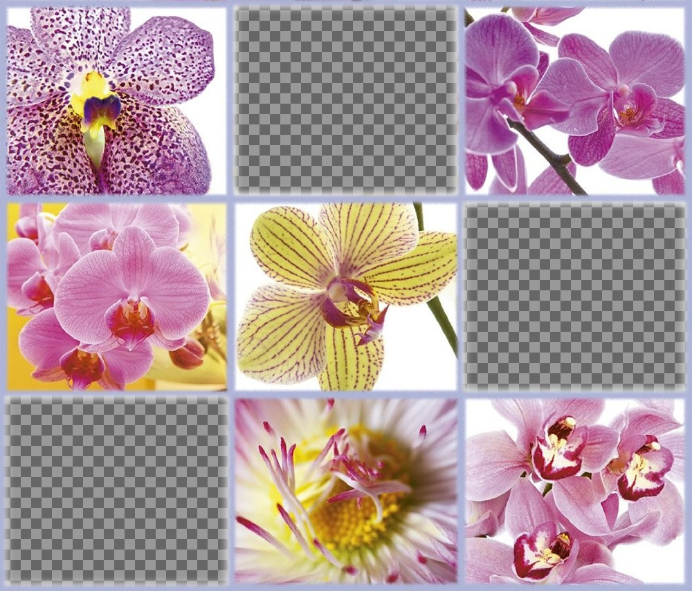 Free collage with beautiful flowers to add three of your photos