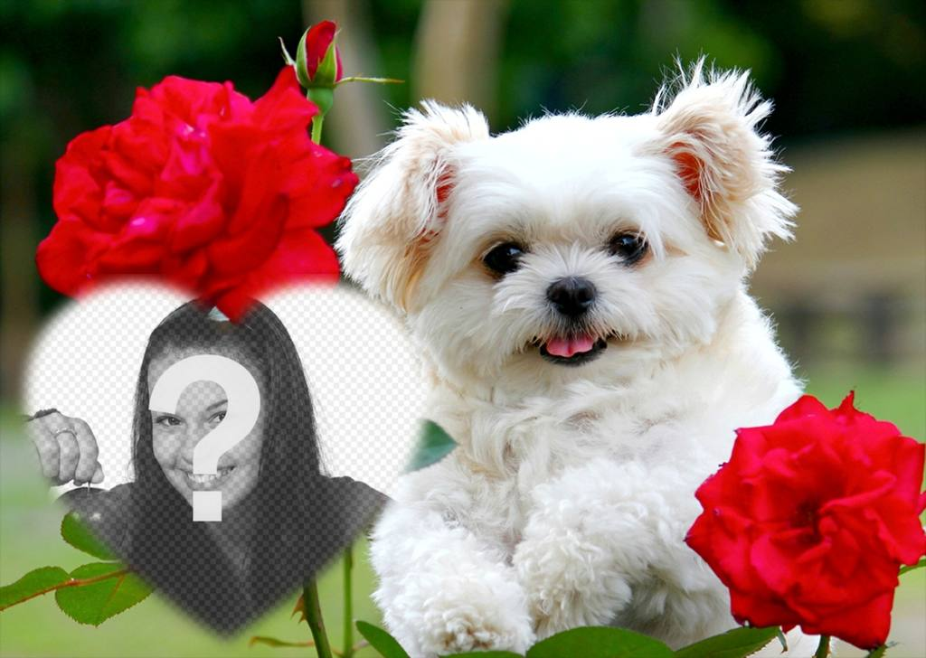 Free effect of love with a cute puppy and red flowers to add your photo