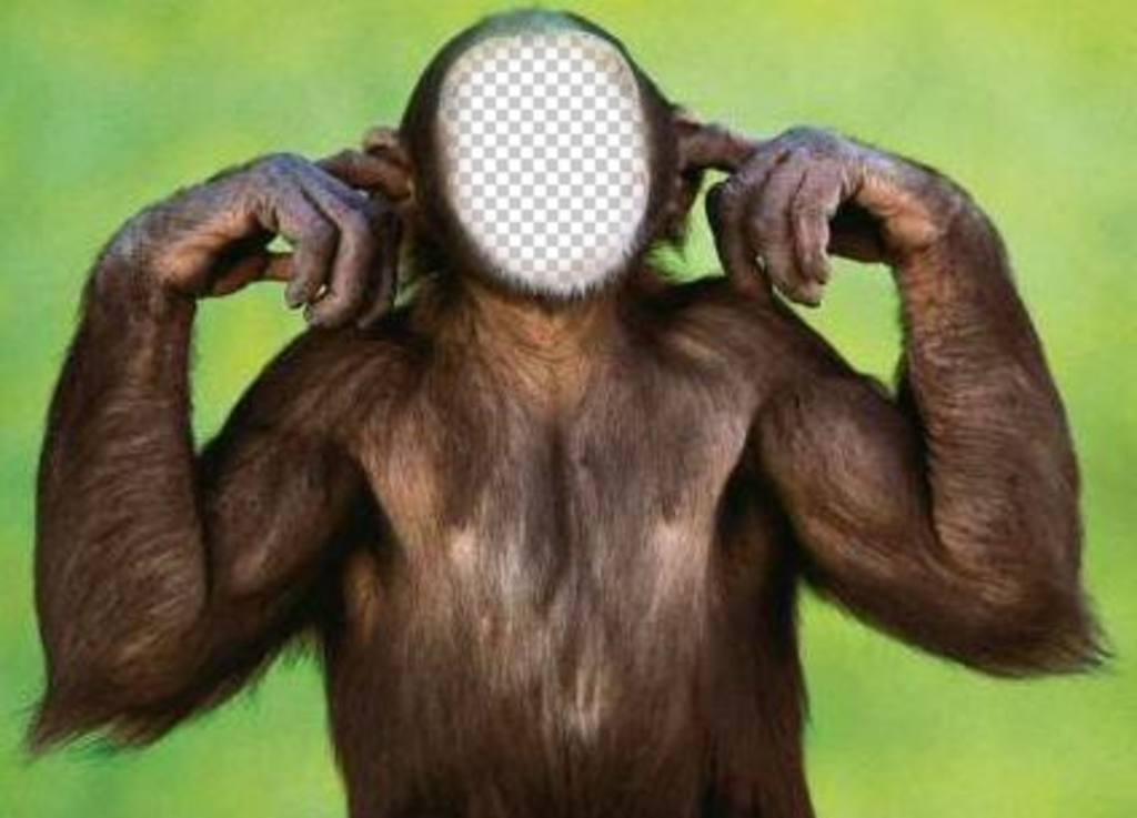 Photomontage of monkey that does not listen to edit with your photo