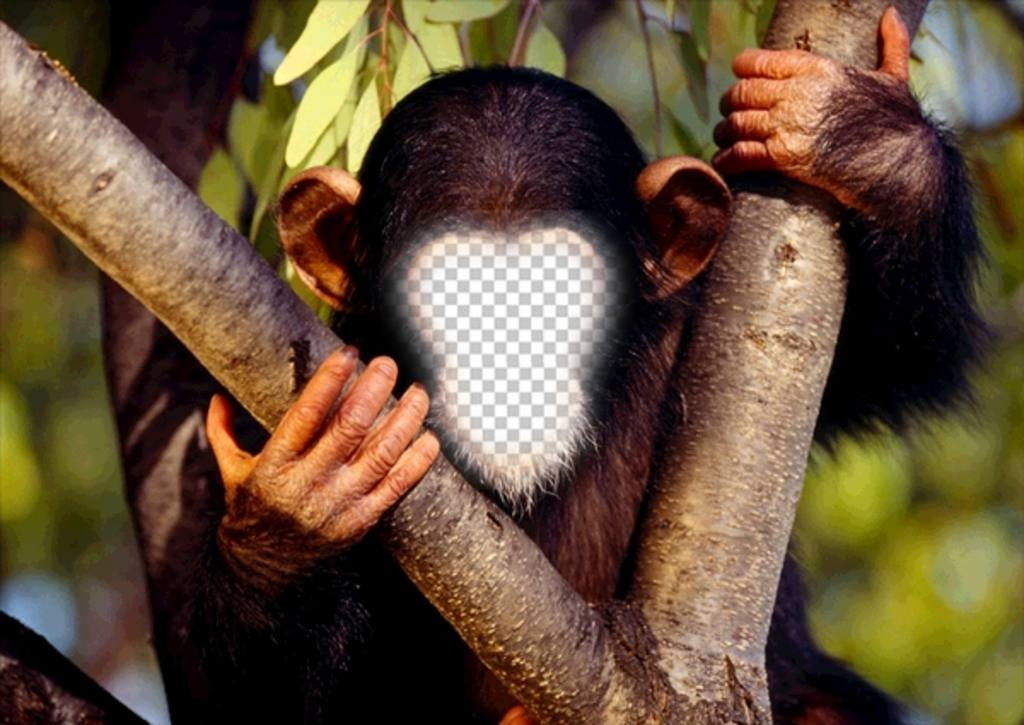 Fun effect to put your face to a monkey online