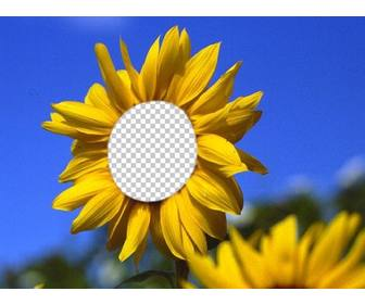 funny photomontage to put ur face on beautiful sunflower