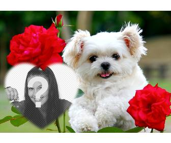 free effect of love with cute puppy and red flowers to add ur photo