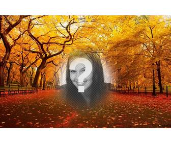 autumnal landscape of park where u can insert ur photo for free