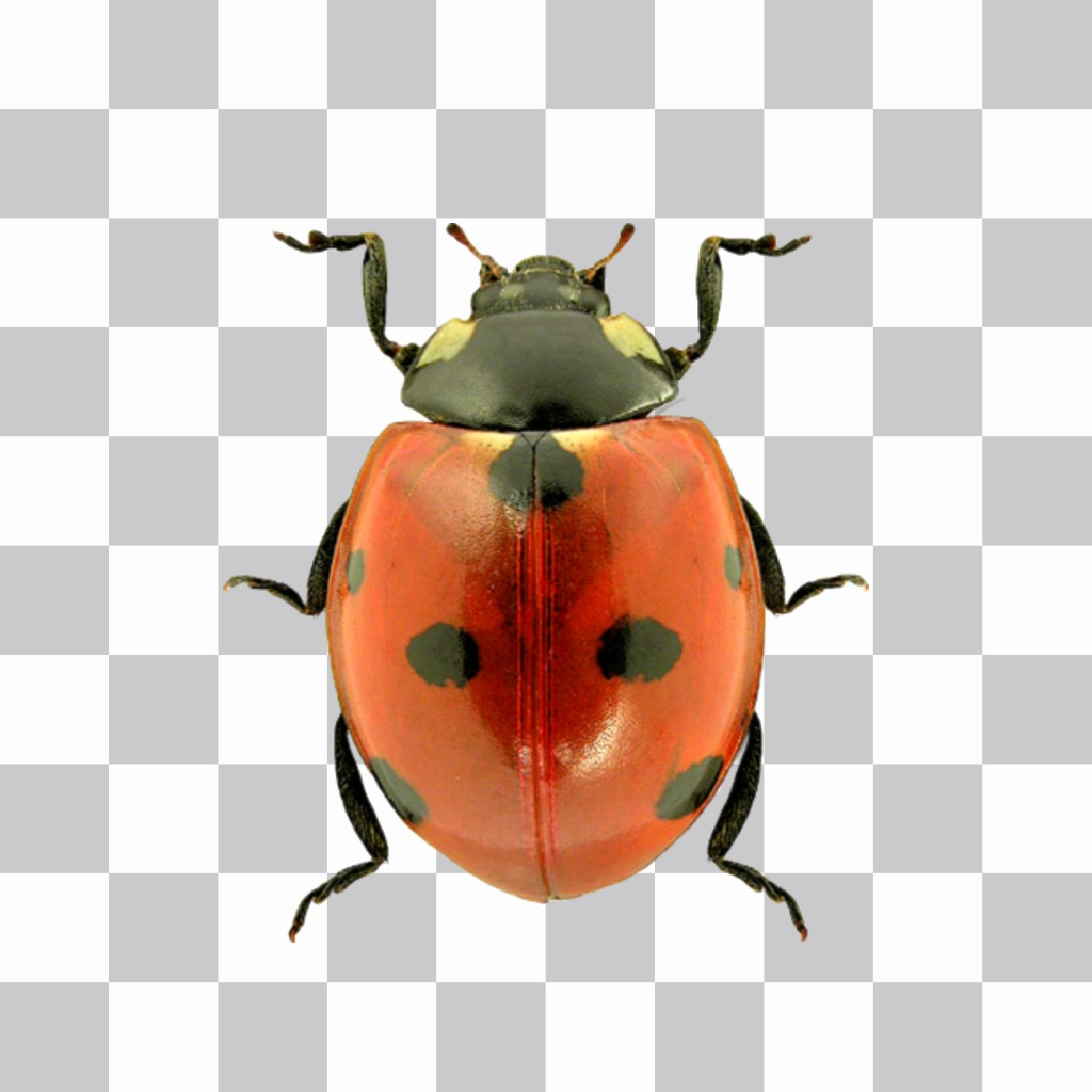 Photomontage to put a ladybug on your photos