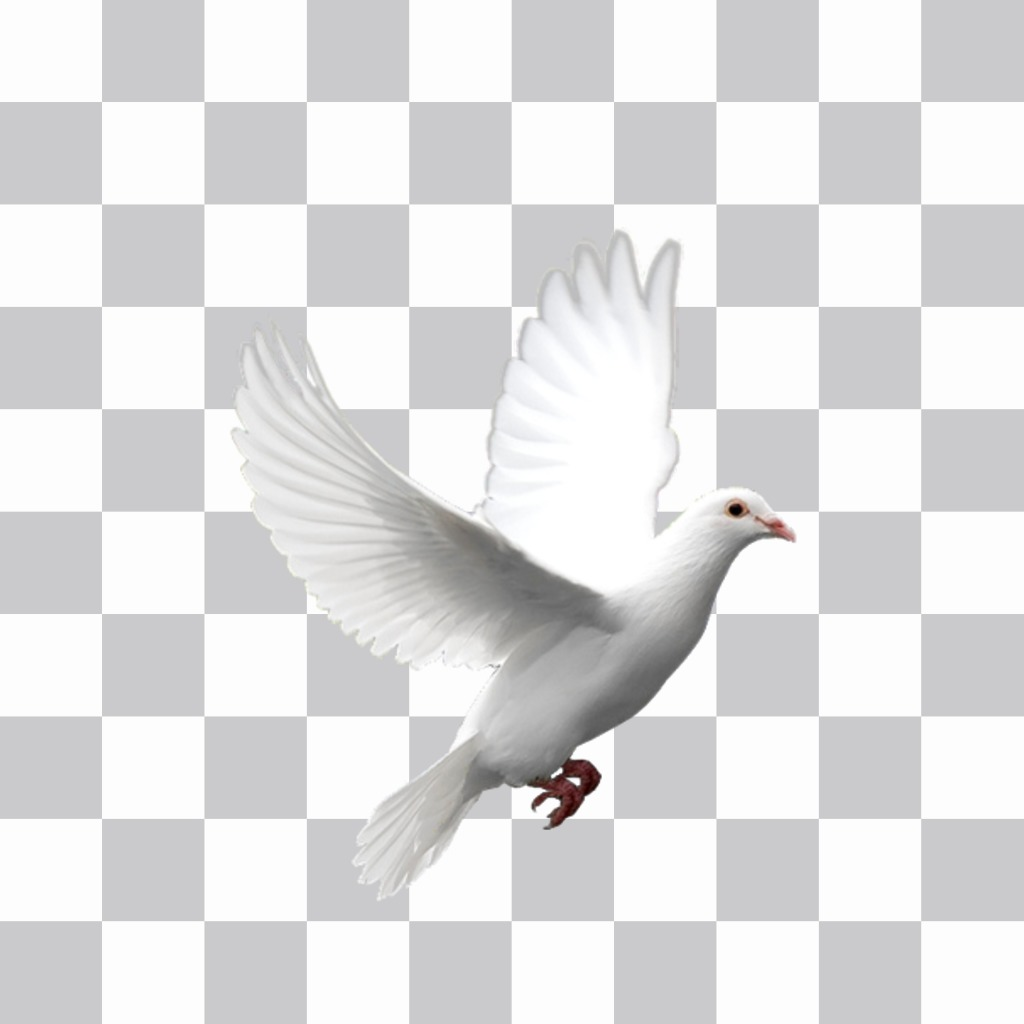 White dove flying you can put in your photos with our editor stickers. Put the animal