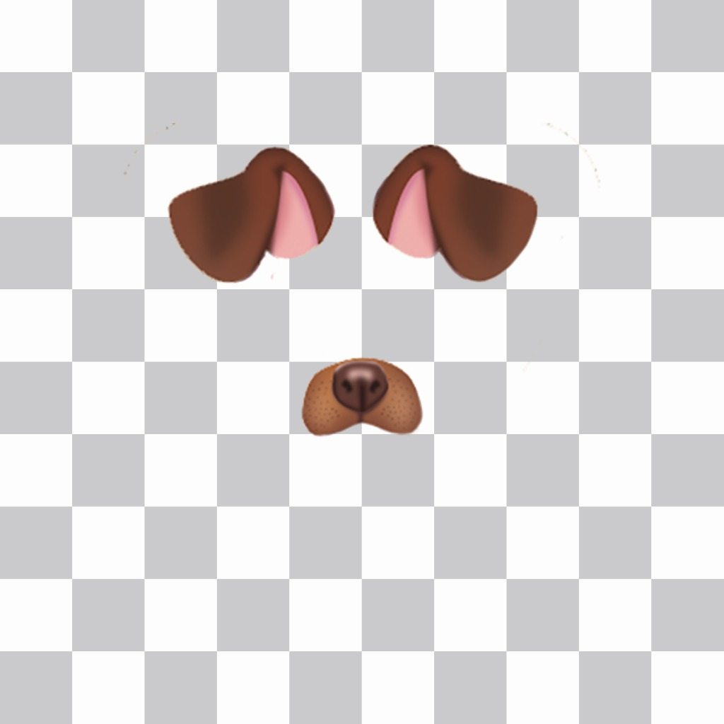 Stick the ears and nose of a puppy in your free photo